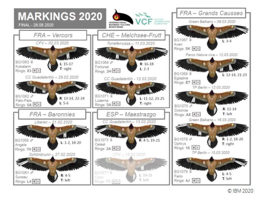 Markings2020
